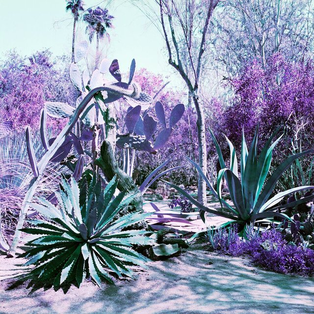 "Karin Bubaš, ""Agave Garden in Green and Purple,"" 2017"