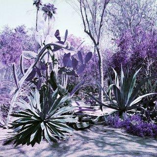 "Karin Bubaš, ""Agave Garden in Green and Purple,"" 2017"