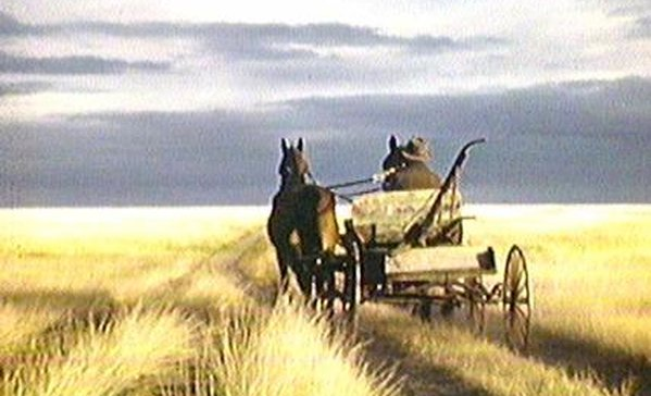 "Evelyn Spice Cherry, ""Windbreaks on the Prairie,"" (1943)"