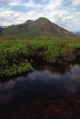 Views along the Dempster Highway.