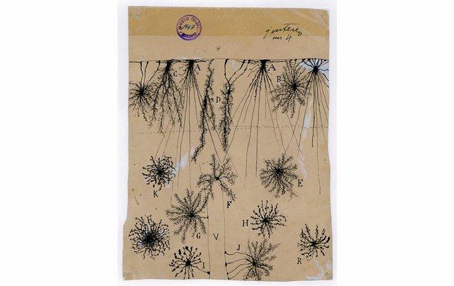 "Santiago Ramón y Cajal, ""glial cells of the cerebral cortex of a child,"" 1904"