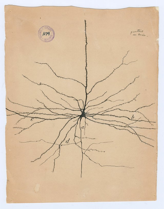"Santiago Ramón y Cajal, ""the pyramidal neuron of the cerebral cortex,"" 1904"