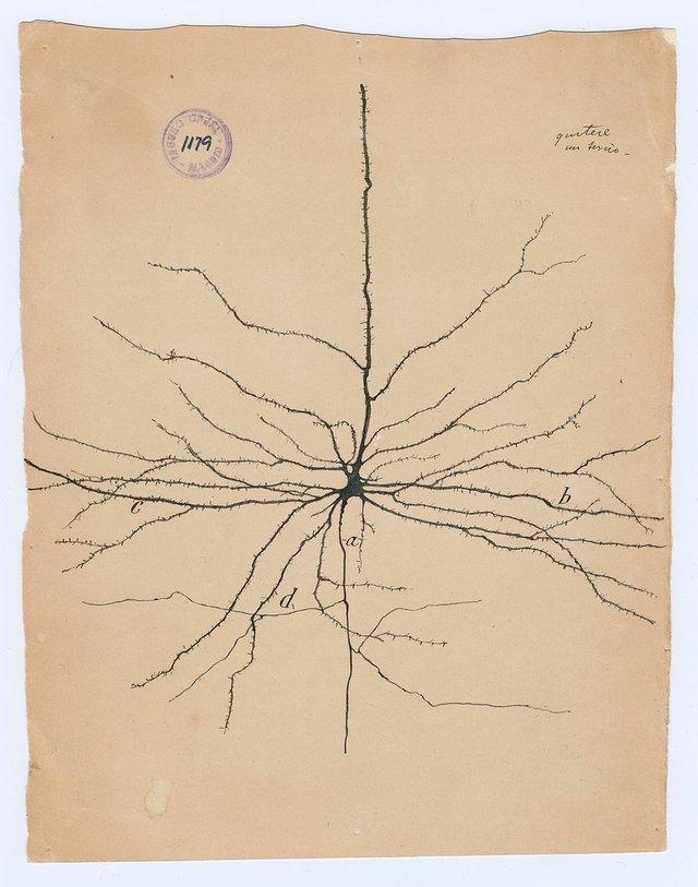 "Santiago Ramón y Cajal, ""the pyramidal neuron of the cerebral cortex,"" 1904"