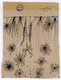 "Santiago Ramón y Cajal, ""glial cells of the cerebral cortex of a child, 1904"