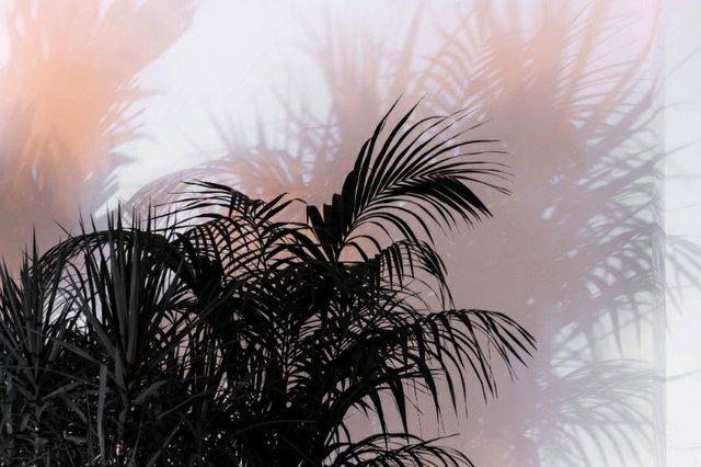 "Andrew Dadson, ""Black Plants,"" 2017"