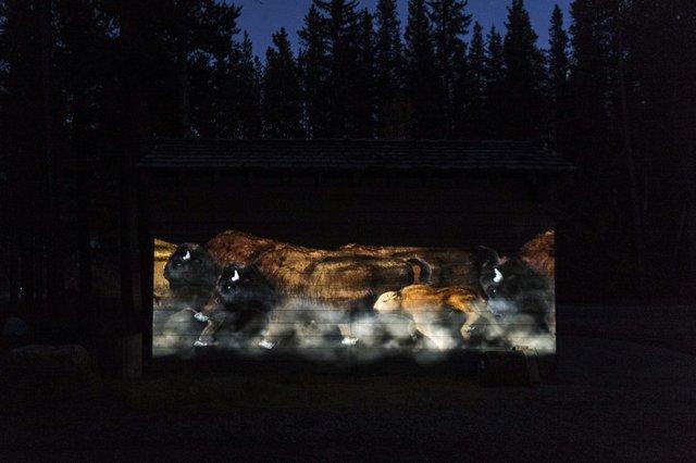 """Sarah Fuller and Moment Factory, """"Illuminations: Human / Nature,"""" 2017"""
