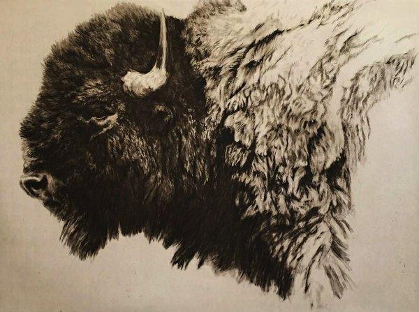 """Robert Bateman, """"Bison Head,"""" nd"""