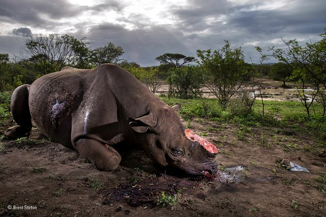 Brent Stirton, Wildlife Photographer of the Year