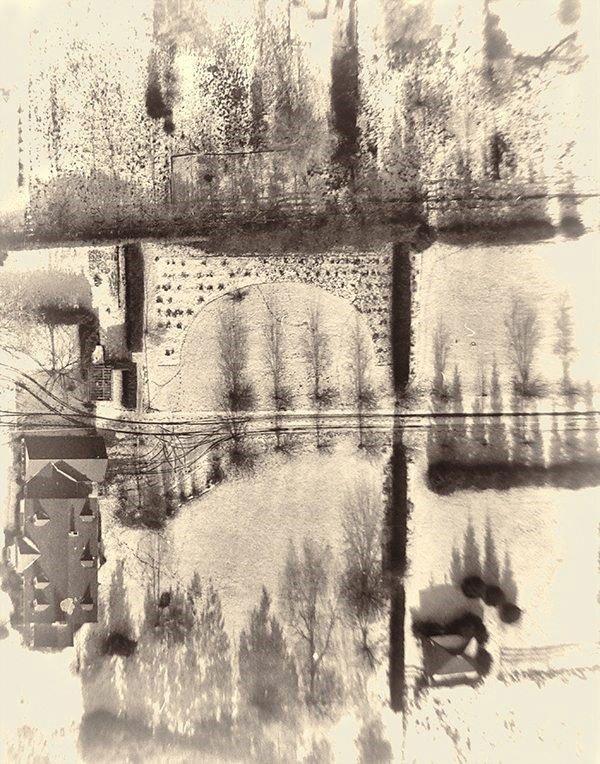 """Edith VanderKloot, """"Tree Lines B"""" nd"""