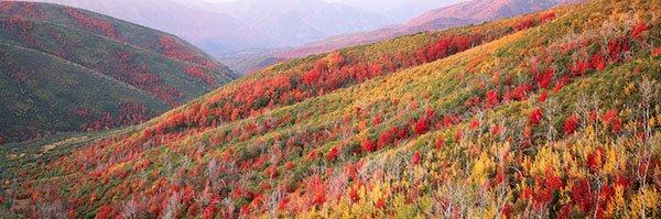 """Steven Friedman, """"Painted Hills,"""" nd"""