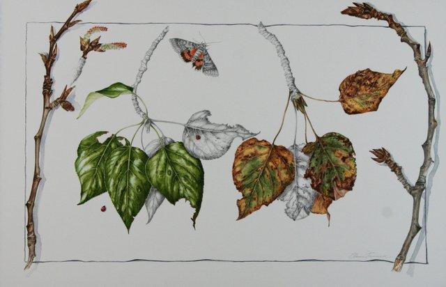 "Elaine Funnell, ""Populus balsamifera Seasons – Balsam Poplar #6,"" 2013"