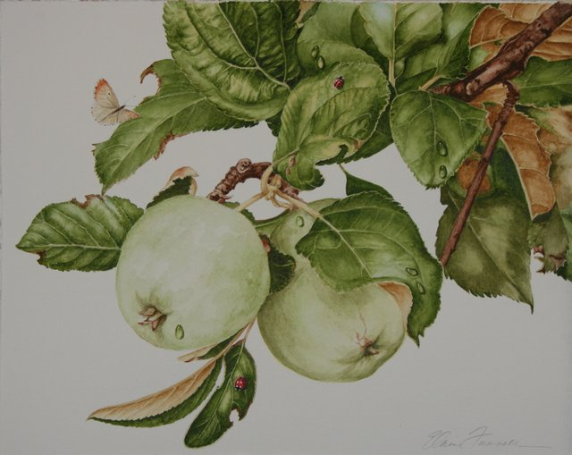 "Elaine Funnell, ""Joan's Apples #5,"" 2015"