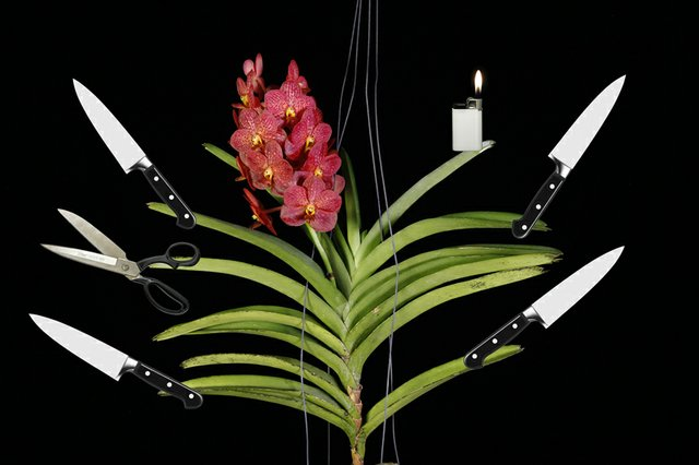 "Arvo Leo, ""Vanda Orchid With Knives,"" 2018"