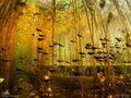 "Eiko Jones, ""Cloud of Tadpoles,"" 2012"