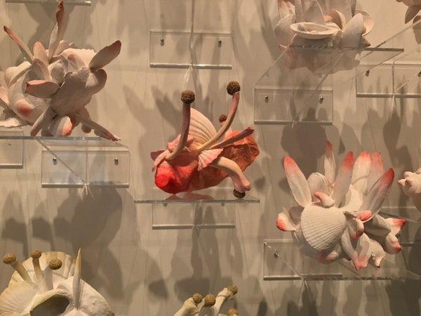 "Lyndal Osborne, ""Coral Project (detail),"" 2018"