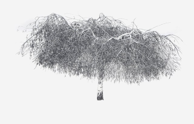 "Christine Kirouac, ""Weeping Birch (from the After Winter, Before Spring Series), 2018"