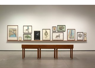 "Reena Saini Kallat, ""Hyphenated Lives,"" installation view at Art Gallery of Alberta, Edmonton (photo by Charles Cousins)"
