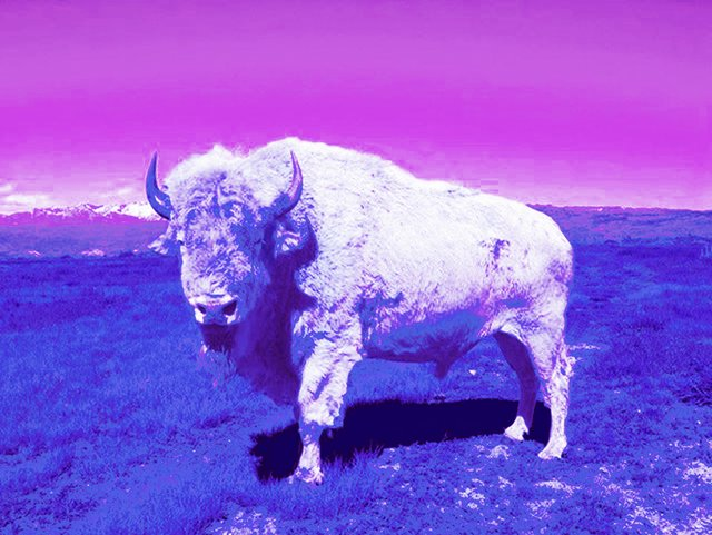 "Dana Claxton, ""Tatanka (Buffalo)"" from the series ""Indian Candy,"" 2013"