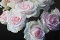 """Robert Lemay, """"Winter Roses,"""" 2019"""
