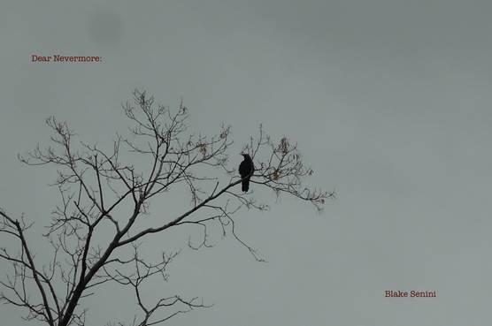 "Blake Senini, ""Dear Nevermore,"" 2019"