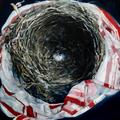 "Corey Hardeman, ""nest,"" 2019"
