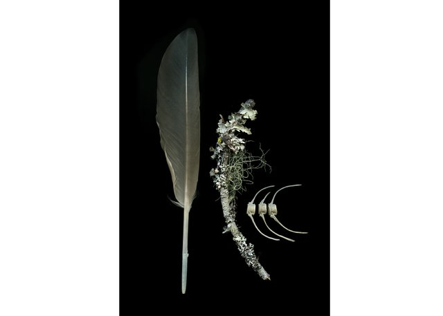 """Julya Hajnoczky, """"Haliaeetus leucocephalus,"""" 2019"""
