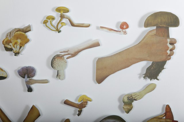 "Yvonne Mullock, ""Mushrooms of North America/Vogue,"" 2017"