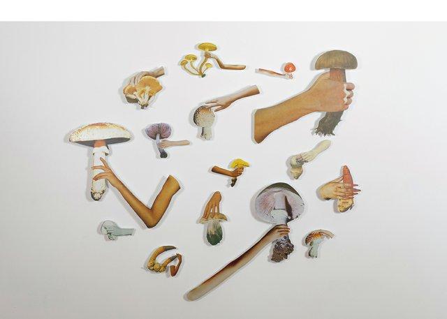 "Yvonne Mullock, ""Mushrooms of North America/Vogue,""2017"