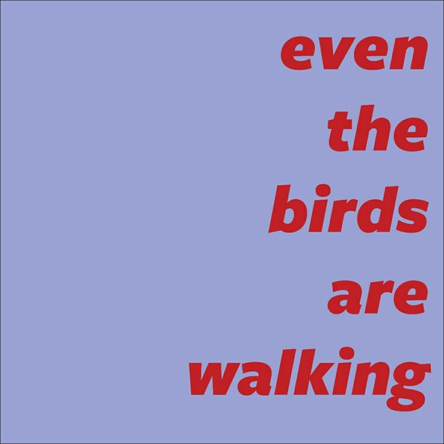 "Latitude 53, ""even the birds are walking,"" 2020"