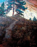 """Thompson Canyon Pine"""