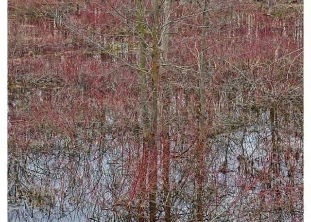"Edward Burtynsky, ""Natural Order #20,Grey County, OntarioCanada, Spring 2020,""chromogenic colour photograph"