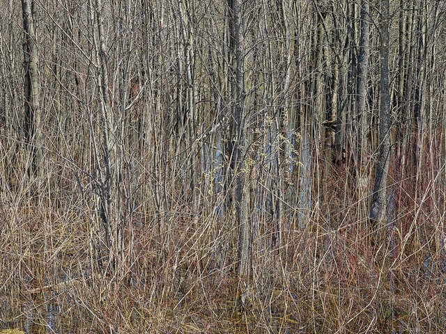 "Edward Burtynsky, ""Natural Order #19,Grey County, OntarioCanada, Spring 2020,"" chromogenic colour photograph"