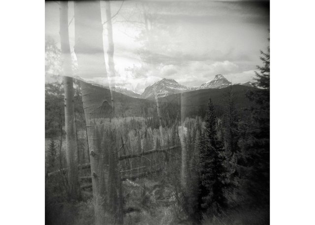 "Dianne Bos, ""Untitled Landscape Alberta, Trees and Rocky Mountains, Kananaskis,"" 2020"
