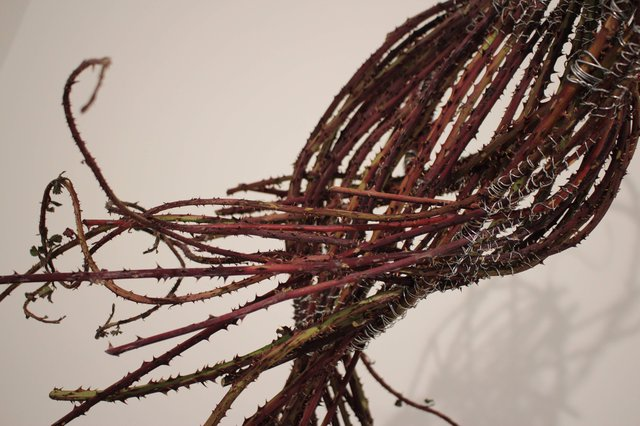 Haley Bassett: Snare