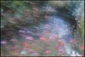 """""""Pond with Flowers and Sun Sparkles"""""""