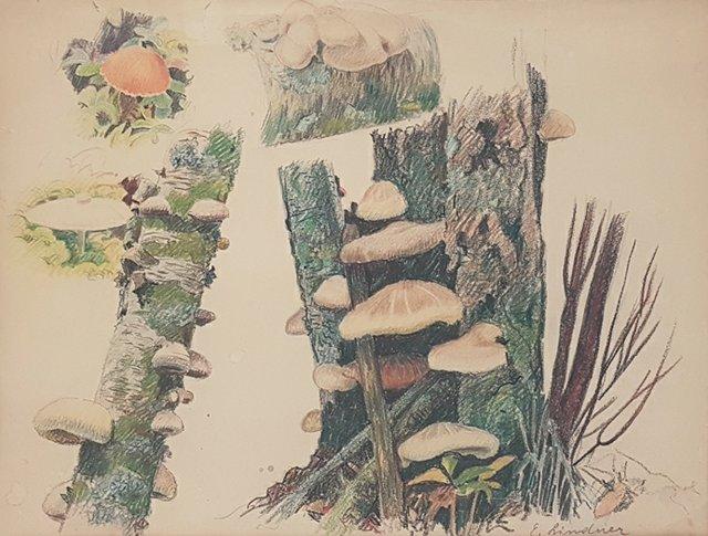 "Ernest Lindner, ""Untitled (mushroom studies),"" c.1968"