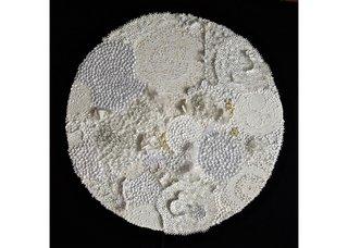 """Rhonda Harder Epp, """"Lichen in White – 1,"""" 2015"""