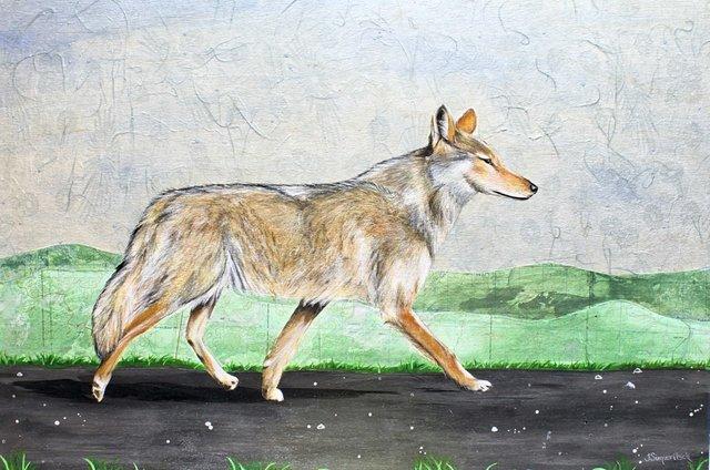"""Terra Simieritsch, """"Canis latrans,"""" 2020"""