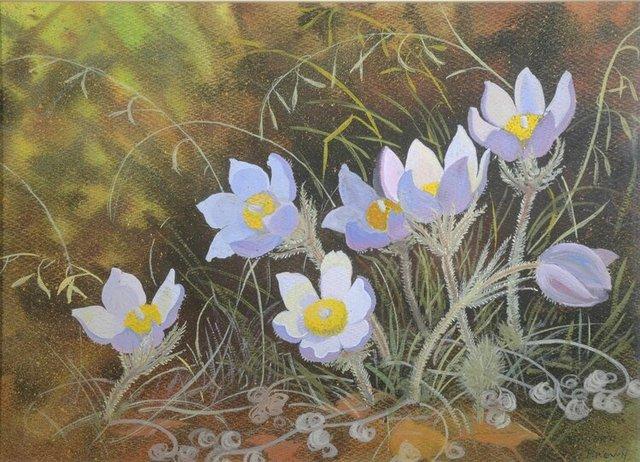 """Annora Brown OCA, CPE, ASA (1899-1987),""""Pasque Flower (Crocus),"""" 1961"""