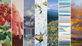 19th Annual Juried Members Exhibition, 2021