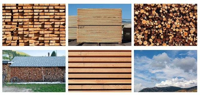 "Fern Helfand, ""Timber, Lumber, Wood, Home #2,"" 2020"
