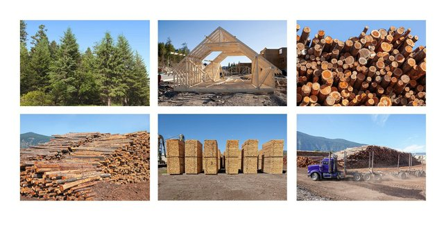 "Fern Helfand, ""Timber, Lumber, Wood, Home #1,"" 2020"