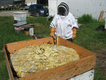 Aganetha Dyck with her artwork, a tablecloth that 500,000 honey bees worked on for two summers. (photo by Peter Dyck)