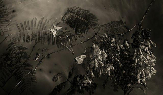 """Whitney Lewis-Smith, """"Jacarandas at Night in Parque Mexico,"""" 2021"""