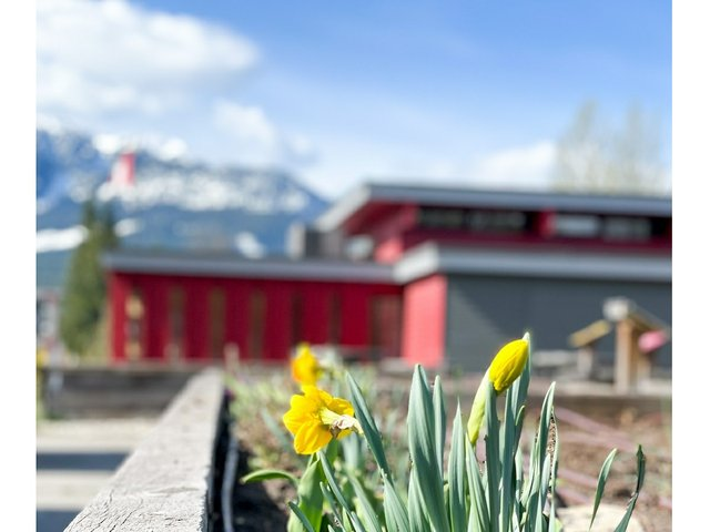 Foreground: Local Food Initiative Gardens on site | Background: Revelstoke Visual Arts Centre