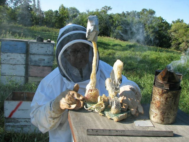 Aganetha Dyck inspects a sculpture made in collaboration with a hive of bees. (courtesy of artist)