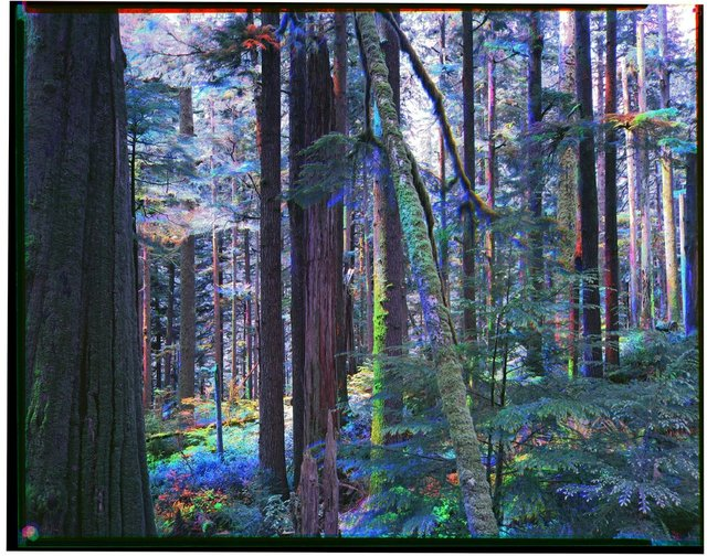 """Mike Andrew McLean, """"Please, John, Don't Screw This Up For the Rest of Us / Version 3 / The Forest for The Trees,"""" 2021"""