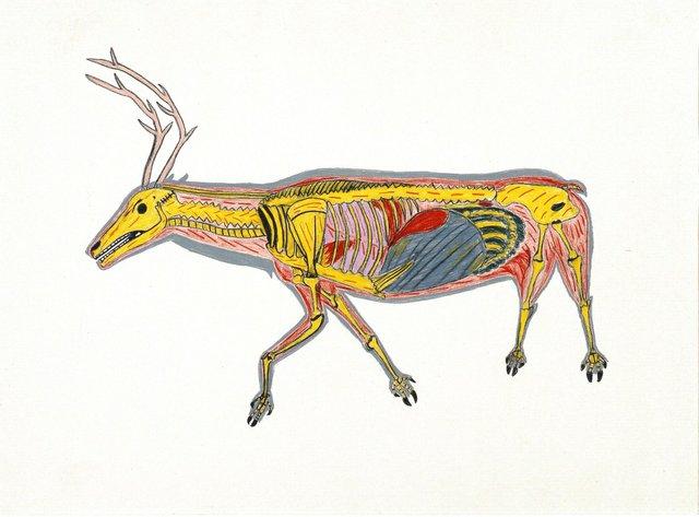 "William Noah, ""The Skeletoned Caribou,"" 1974"