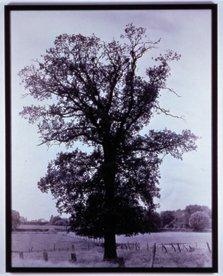 """""""Flanders Trees (detail)"""""""