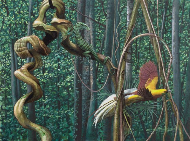 "Carel Brest van Kempen ""Lesser Bird of Paradise & Green Tree Monitor"""